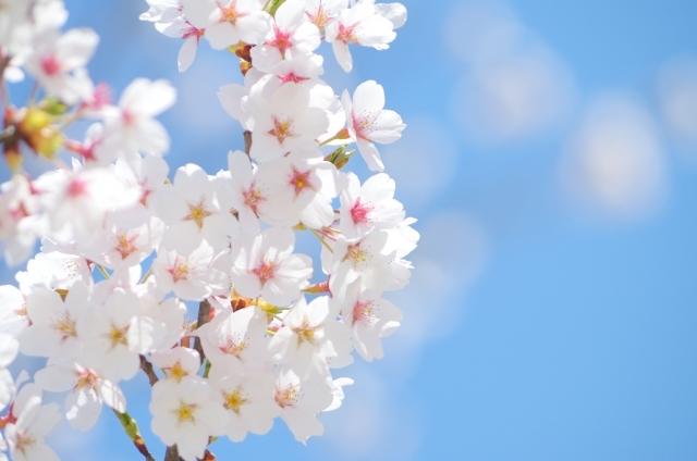 春が来るとなぜ眠たくなるの